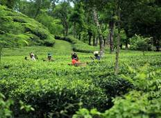 Sreemangal – Tea Garden & Rain forest Expedition Tour