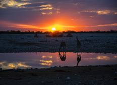 4-Day Etosha National Park (Lodging) Tour