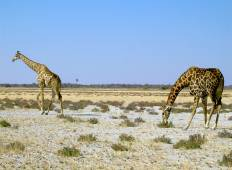 15-Day Namibia Highlights (Accommodated Tour) Tour