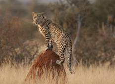African Adventure Namibia  (Accommodation/Transport & Activities Included) Tour