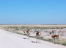 6-Day Sossusvlei and Etosha National Park (Camping) Tour