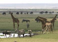 3 Days Amboseli Wildlife Safari  Tour
