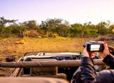 Cape, Safari & Falls Tour