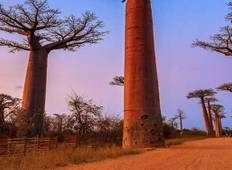 Madagascar Baobabs & Beyond Tour