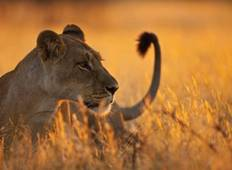 3  Days 2 Nights Safari Tarangire,Lake Manyara & Ngorongoro Crater  Tour