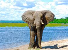 Exploring South Africa, Victoria Falls & Botswana (9 destinations) Tour