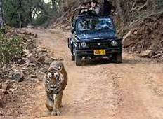 Wildlife Ranthambore Tiger safari Tour With Agra and Jaipur 04 Nights 05 Days Tour