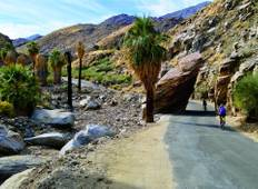 California: Palm Springs & Joshua Tree National Park Tour
