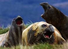 Wildlife, Glaciers & Cape Horn Tour