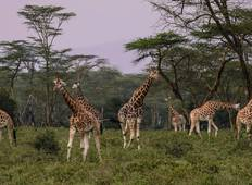 Kenya: A Classic Safari with Nairobi & Maasai Mara Extended Stay Tour