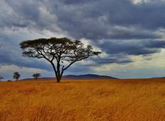 Tanzania: The Serengeti & Beyond with Serengeti Extended Stay Tour