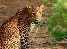 Untouched Sri Lankan Wild Life – 8 Days Tour Tour