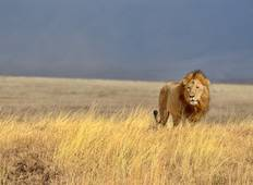 3 Day Tanzania Safari Tour