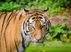 India\'s Golden Triangle And The Tigers Of Ranthambore With Dubai 2019 Tour