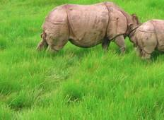 Chitwan National Park Safari Tour