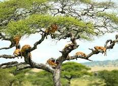 3days 2night Privete tanzania safari wildlife lake Manyara National park ,ngorongoro Ctrater, Tarangire National Park  Tour