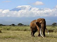 4 Days Maasai Mara and Lake Nakuru Safari in Rift Valley, Kenya Tour