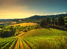 Private Gourmet Wine Tour in Tuscany, Italy Tour