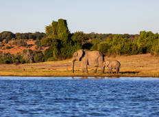 Southern Africa: travel to the ends of the earth with extended stay at the Cape Peninsula (port-to-port cruise) (including Livingstone) Tour