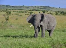 7 Days Epic Journey into the Heart of Africa Safari in Kenya Tour