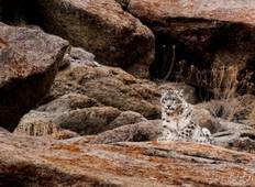 15 Day -Snow Leopard Expedition with BBC Planet Earth II Trackers Tour