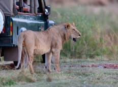 5 Days 4 Nights Mikumi & Ruaha National Park Lodge Safari Tour