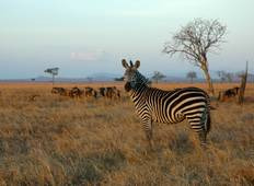 3 Days 2 Nights  Mikumi Wildlife  Lodge Safari Tour
