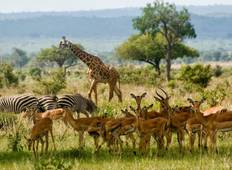 3 Days 2 Nights  Mikumi National Park Lodge Safari Tour