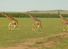 3 Days 2 Nights  Masai Mara Safari Tour