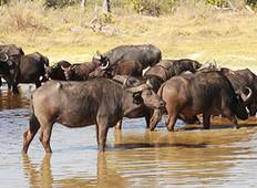 OVER-LANDING SAFARI TOUR IN BOTSWANA Tour