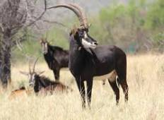 Okavango Delta, Moremi Game Reserve, Khwai village and Savuti  Tour