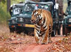 Royal Rajasthan Tour with Tiger (Ranthambore) Tour