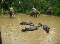 Chitwan Jungle Safari Package Tour - 3 Nights 4 Days Tour