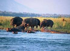 Wildlife and Hwange Safari Tour