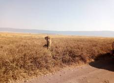 Safari in Tarangire, Ngorongoro and Lake Manyara Tour