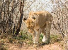 4 Day Classic Kruger Park Safari Tour