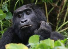 10 Days Adventuring the Primates and Wildlife of Uganda - Private tour for 2 person Tour