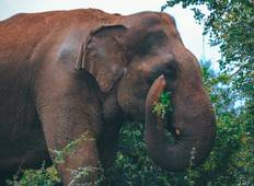 Wonders of Sri Lanka - 9 Days Tour