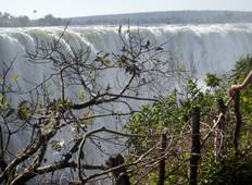 Victoria Falls Hwange And Chobe Tour