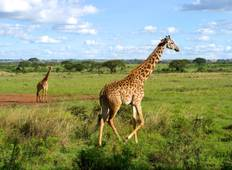 12 Days Cape & Namibia Serviced Camping / PLUS Tour
