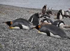 Land Of Penguins And Icebergs Tour