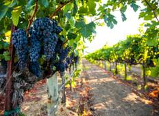 Cycling California Wine Country Tour