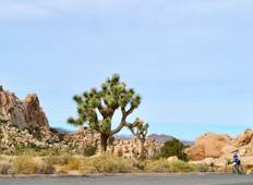 California: Palm Springs & Joshua Tree National Park - 6 Days Tour