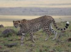 5 Days 4 Nights Budget Kenya Safari Tour