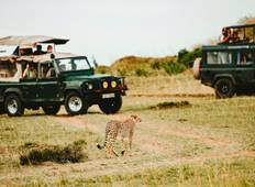 3 Days Masai Mara Safari (in a 4x4 JEEP with FREE NIGHT at Nairobi Hotel) Tour
