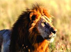3 Days Masai Mara Safari Tours Tour