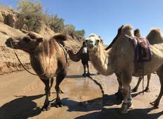 Camel Trekking in South Gobi Tour