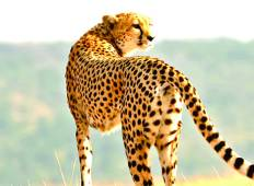Masai Mara & Amboseli Big 5 Wildlife Safaris Tour