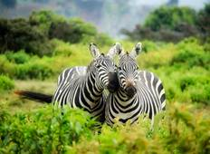 4 Days Amazing Kenya Safari Tour