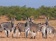 Kruger Nationalpark Big 5 Safari & Panorama-Route - 4 Tage Rundreise